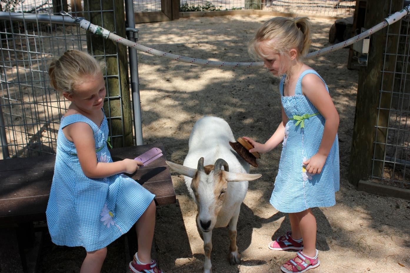 Brevard Zoo Petting Zoo